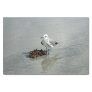 Seagull with Seaweed Tissue Paper