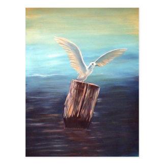 Seagull: www.AriesArtist.com Postcard