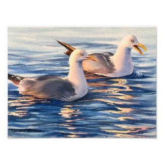 Seagulls - 16x12 photo print