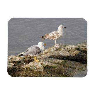 "Seagulls 3""x4"" Magnet"