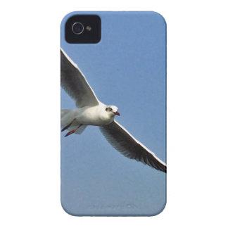 Seagulls are beautiful birds Case-Mate iPhone 4 case