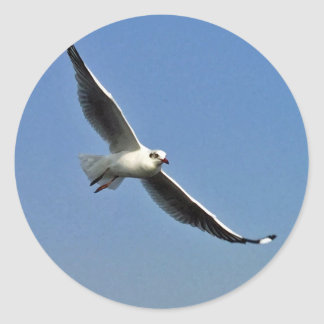 Seagulls are beautiful birds classic round sticker