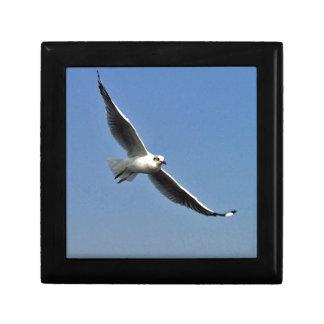 Seagulls are beautiful birds gift box