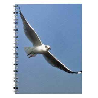 Seagulls are beautiful birds notebooks