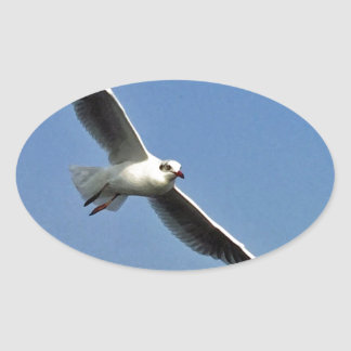 Seagulls are beautiful birds oval sticker