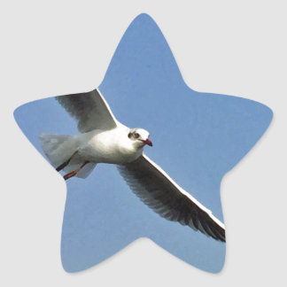 Seagulls are beautiful birds star sticker
