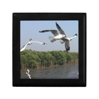 Seagulls at the beach gift box
