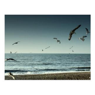 Seagulls Brighton Postcard