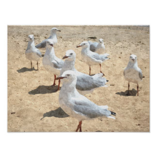 Seagulls By The Seashore Poster