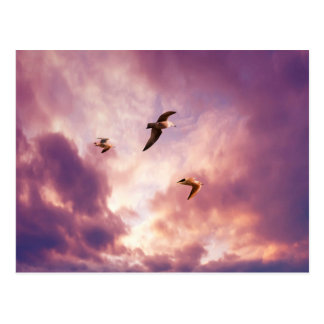 Seagulls flying in a sunset sky postcard