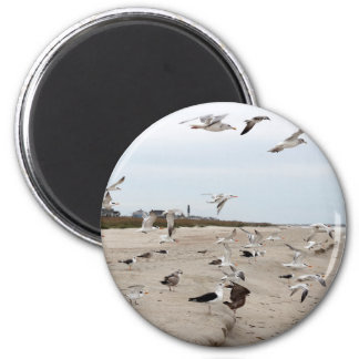 Seagulls Flying, Standing and Eating on the Beach 2 Inch Round Magnet