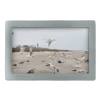 Seagulls Flying, Standing and Eating on the Beach Belt Buckle