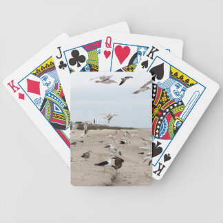 Seagulls Flying, Standing and Eating on the Beach Bicycle Playing Cards