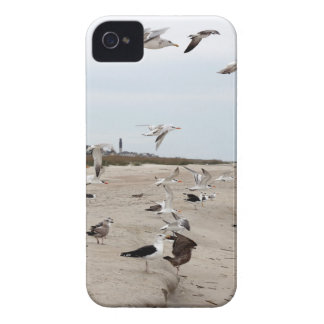 Seagulls Flying, Standing and Eating on the Beach Case-Mate iPhone 4 Case