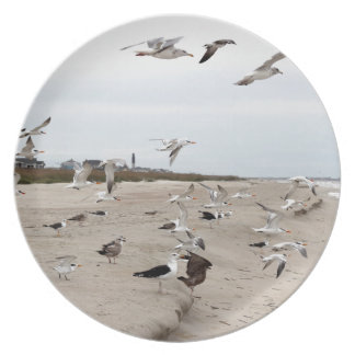 Seagulls Flying, Standing and Eating on the Beach Dinner Plates