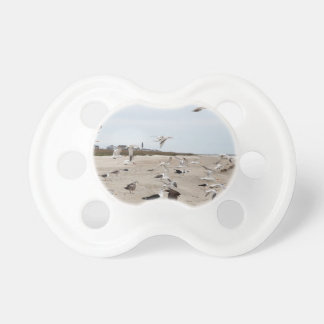 Seagulls Flying, Standing and Eating on the Beach Pacifier