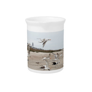 Seagulls Flying, Standing and Eating on the Beach Pitcher