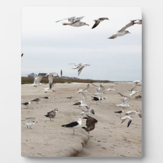 Seagulls Flying, Standing and Eating on the Beach Plaque