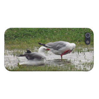 Seagulls in a Puddle iPhone 5 Cover