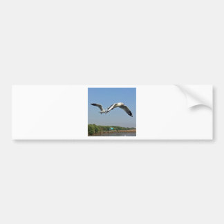 Seagulls in Flight Bumper Sticker