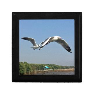 Seagulls in Flight Gift Box