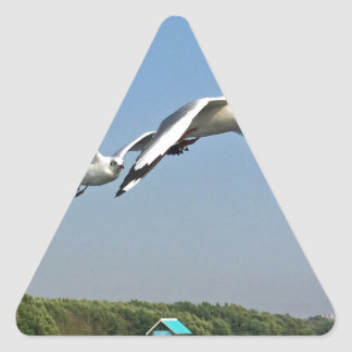 Seagulls in Flight Triangle Sticker