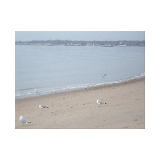 Seagulls in Winter Canvas Print