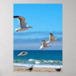 Seagulls mf poster