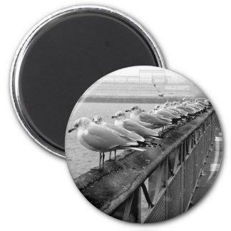 Seagulls on Railing Magnet