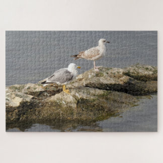 Seagulls on Rock Jigsaw Puzzle