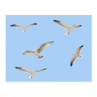 Seagulls Postcard