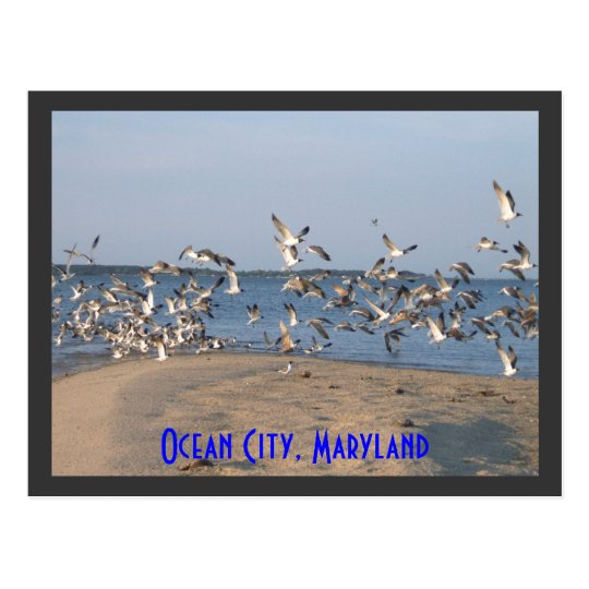 Seagulls Postcard, Ocean City, Maryland Postcard
