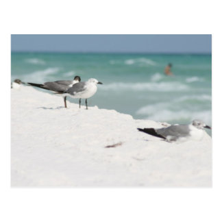 seagulls sea gull picture photo art gifts postcard
