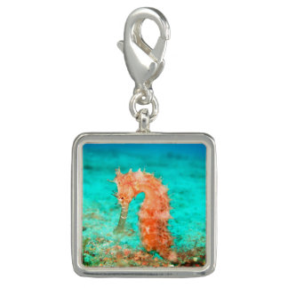 Seahorse coral reef charm for charm bracelet