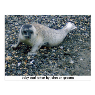 SEAL (2), baby seal taken by johnson greene Postcard