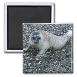 SEAL (2) SQUARE MAGNET