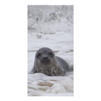 Seal - Animal Colour Print Photo Card
