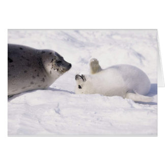 seal buddies card