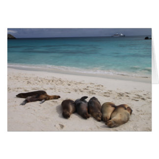 Seal Card