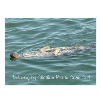Seal Floating on Back in Chatham Pier in Cape Cod Postcard