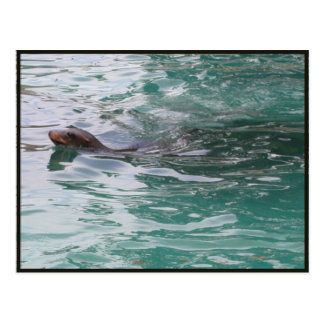 Seal Head Peeks Postcard