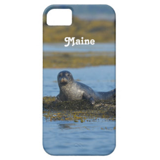 Seal in Casco Bay Maine iPhone 5 Covers