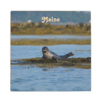 Seal in Casco Bay Maine Maple Wood Coaster
