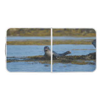 Seal in Casco Bay Maine Pong Table