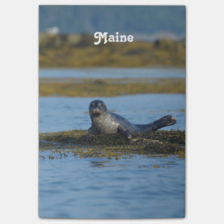 Seal in Casco Bay Maine Post-it® Notes