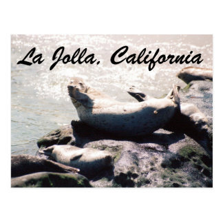 Seal in La Jolla California Photo Postcard