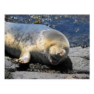 seal laughing puffin tours farne Islands uk Postcard