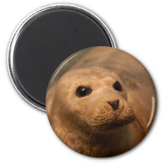 Seal 2 Inch Round Magnet
