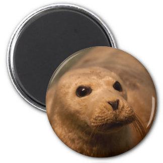 Seal Refrigerator Magnet