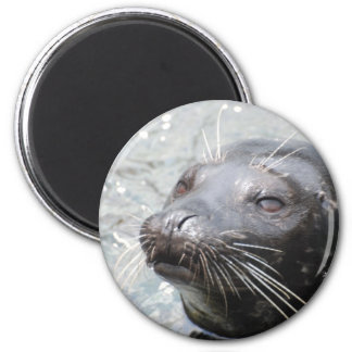 Seal  Magnet Fridge Magnet